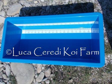 Vasca rettangolare in vetroresina rinforzata 100 x 43 x 30 cm